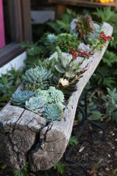 cool use for this planting ideas