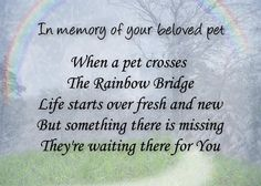 Pet loss sympathy card  Pet waits for you  by TheLaughingPet, $3.50