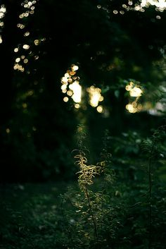 There's something really nice about the singularity of that plant in the light. A true moment. CM