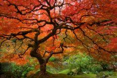 Tlcharger Fond d'ecran arbre, automne, feuillage, rouge Fonds d'ecran gratuits pour votre rsolution du bureau 1680x1120 — image №14269