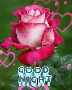 Good Night Greetings, Flowers Gif, Motivational Quotes For Women, Beautiful Gif, Good Night Quotes, Dil Se, Woman Quotes, Roses, Womens Fashion