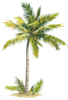 fgchg - News Hair-Sytles Watercolor Trees, Watercolor Landscape, Watercolor Paintings, Palm Tree Drawing, Palm Tree Art, Tree Photoshop, Painting Lessons, Tropical Art, Flower Art