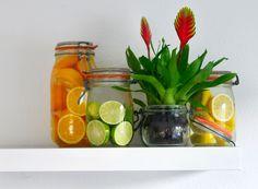 Vitamine Bromeliad