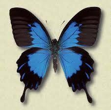 farfalle - Cerca con Google