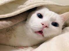 「猫 せっちゃん」