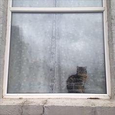Kitty cat, in Margate window.