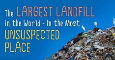 4.7 million tons of plastic ends up in oceans each year, killing an estimated 300,000 animals either from ingested plastic or getting tangled in plastic. http://articles.mercola.com/sites/articles/archive/2015/03/21/plastic-trash-ocean.aspx