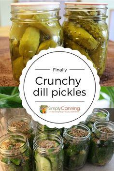 Tired of soggy pickles? This easy dill pickle recipe produces crunchy pickles. Learn the trick at Home Canning Recipes, Cooking Recipes, Canning Tips, Recipes Dinner, Crunchy Dill Pickle Recipe, Dill Pickle Recipes, Dill Pickling Spice Recipe, Cucumber Pickle Recipe, Antipasto
