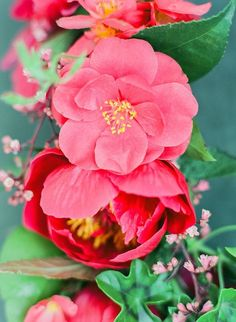 vibrant camellias and peonies