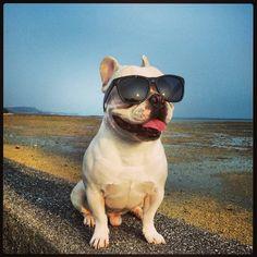 French Bulldog – Playful and Smart French Bulldog Personality, French Bulldog Facts, French Bulldog Blue, French Bulldogs, English Bulldogs, Dog Love, Puppy Love, Bulldog Meme, Bulldog Puppies For Sale