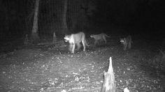Panthers to get Caloosahatchee River crossing