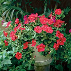 100 Container Gardening Ideas | Petunias | Petunias  All petunias need good drainage, which growing in a pot (with at least one hole in the bottom) provides. Use a cascading variety for a luxurious planting.SouthernLiving.com