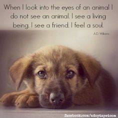 Inspirational quotes about animals. Visit the Canine Support Teams to see how our service dogs give I Love Dogs, Puppy Love, Cute Dogs, Inspirational Animal Quotes, Inspiring Quotes, Amazing Quotes, Friday Quotes Humor, Dog Quotes Love, Animal Lover Quotes