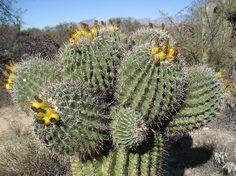 Google Image Result for http://media-cdn.tripadvisor.com/media/photo-s/01/0e/63/ce/alien-cactus.jpg