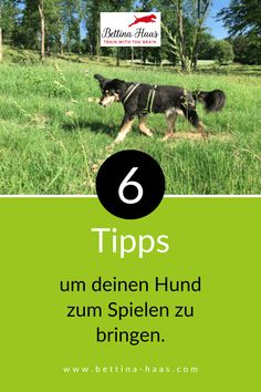 Du möchtest endlich einen Hund, der mit dir spielt? Diese 6 Tipps helfen dir, deinen Hund zum Spielen zu bringen. Motivation, Dogs, Poster, Wellness, Fitness, Dog Anxiety, Dog Garden, Dog Care, Pet Dogs