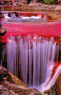 The River of Five Colors - Cano Cristales, Colombia | Car Rental | Car Hire | Travel | Holidays | www.travelholidaycars.com