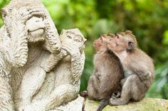 Visit Ubud Monkey Forest, Ubud, Bali - Bucket List Dream from TripBucket