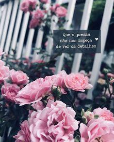 (notitle) - buy me flowers - Blumen My Flower, Pink Flowers, Beautiful Flowers, Flower Aesthetic, Pink Aesthetic, Flower Wallpaper, Iphone Wallpaper, Phone Backgrounds, Wallpaper Backgrounds