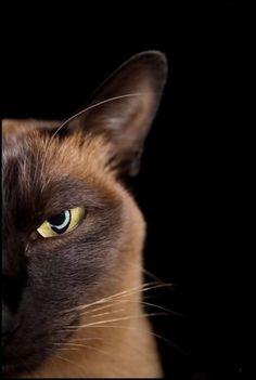 Half a Cat #HelloBrown