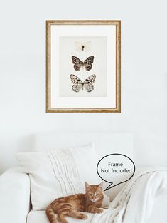 Butterfly Print 8x10 Nature Print by EyePoetryPhotography on Etsy (Art & Collectibles, Prints, Minimalist Art, Spring Decor, White Wall Art, Butterflies, Nature, Butterfly Print, Natural History, Wall Art Print, Wall Decor, Art Print, Nature Print, 8x10, Butterfly Art)