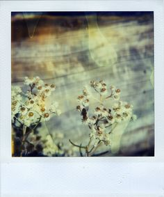 Polaroid by Jamie Larson, via Flickr
