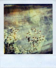 Polaroid by Jamie Larson, via Flickr