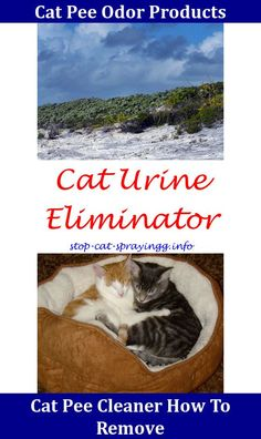 Cat Spray Dr,cleaning cat urine from carpet.Cat Pee Odor Best Cleaner For Cat Spray,cat pee ideas - cat spraying how to make how to get rid of male cat urine smell cat pee smell out of couch cat pee smell in house no cat cat urine stop. Cleaning Cat Urine, Remove Cat Urine Smell, Cat Pee Smell, Cat Urine Smells, Cleaning Spray, Cleaning Hacks, Dog Urine, Urine Odor, Ideas