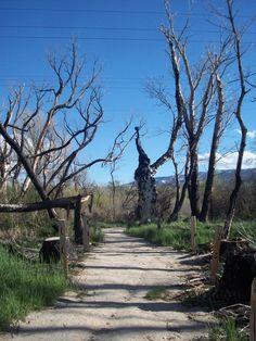 Oxbow Park Path in Reno, Nevada. Picture by AlishaV
