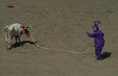 This Teletubbie bull wrangler. | 31 Animal Pictures You Cannot Explain