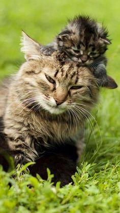 BEST VIEW ....  #funny cat kitty kitten cute animal pet nature  #quelle: Gepinnt von: Guadalupe Aguiar Garcia #http://www.pinterest.com/pin/709457747519460371/