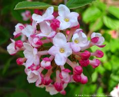 Pink and white flowers in the Spring