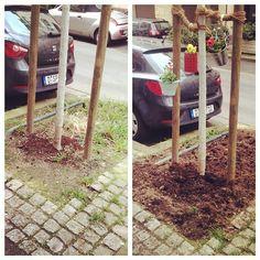 """""""Ab ins Beet"""" - jetzt auch für Baumscheiben und """"MicroVorgärten"""" ;-)"""