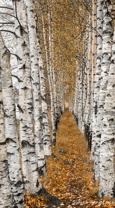 Autumn in the alley: Photo by Photographer Sidsel Tonnessen - photo.net