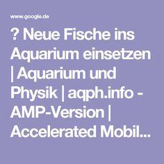 ⚡ Neue Fische ins Aquarium einsetzen | Aquarium und Physik | aqph.info - AMP-Version | Accelerated Mobile Page