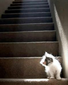 It's Impossible To View These 25 Seriously Cute Pictures Of Kittens Without Smiling (placed under stairs because I like kitties) Crazy Cat Lady, Crazy Cats, I Love Cats, Cute Cats, Kittens Cutest, Cats And Kittens, Funny Kittens, Baby Animals, Cute Animals