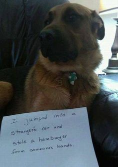 I laugh not because of what the dog did but because of the embarrassment the owner went through! Lol!