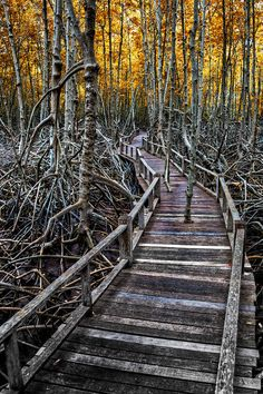 footpath in the Mangroves via fineart