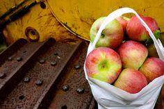 Apple Picking in Massachusetts - Dog-friendly Apple Orchard