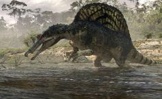 Google Image Result for http://ichef.bbci.co.uk/naturelibrary/images/ic/credit/640x395/s/sp/spinosaurus/spinosaurus_1.jpg
