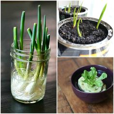 Have you ever heard the word 'Regrowing'? put together 5 examples of how to reuse vegetable leftovers, and we love it! Have you tried it at home before? Have You Tried, Have You Ever, Reuse, Upcycle, Holiday Sales, Things To Do, Ipad, Cases, Vegetables