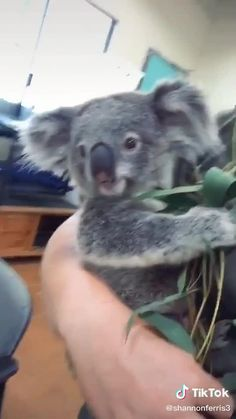 Baby Animals Super Cute, Cute Wild Animals, Cute Little Animals, Cute Funny Animals, Animals And Pets, Cute Animal Videos, Funny Animal Pictures, Majestic Animals, Animals Beautiful