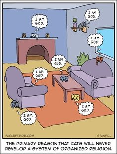 Cats and organized religion | #cats #religion #atheism #humor