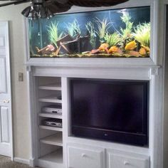 Custom built-in aquarium here in Louisville, ky. Filled with parrot cichlids (freshwater)