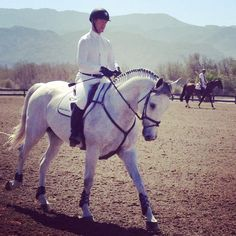 i want this horseeee