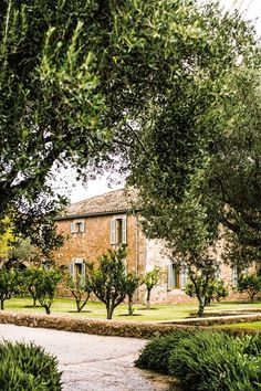 Olive groves at Hotel Can Simoneta in Mallorca, Spain   Mallorca north east coast - guide to the best beaches, restaurants and hotels   Spain (Condé Nast Traveller)