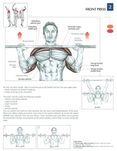 Front Press ♦ #health #fitness #exercises #diagrams #body #muscles #gym #bodybuilding #shoulders