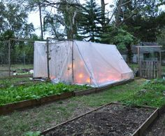 8b8563025b2 Build a temporary greenhouse (a frame with construction plastic with lots of  duct tape) · Florida GardeningCold ...