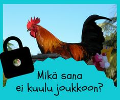 Puhe ja kieli Videos Funny, Special Education, Teaching, Animals, Peda, Tejidos, Animales, Animaux, Learning