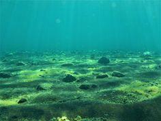 Λάβα και θάλασσα! Aquarium, Travel, Goldfish Bowl, Viajes, Aquarium Fish Tank, Destinations, Traveling, Aquarius, Trips