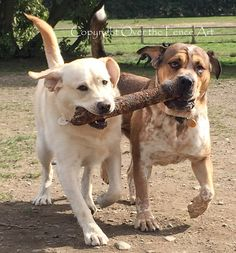 Dog Photography Yellow Labrador and Friend with Big Stick